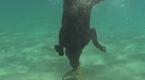 现场:美国宠物犬海中捉龙虾献给主人