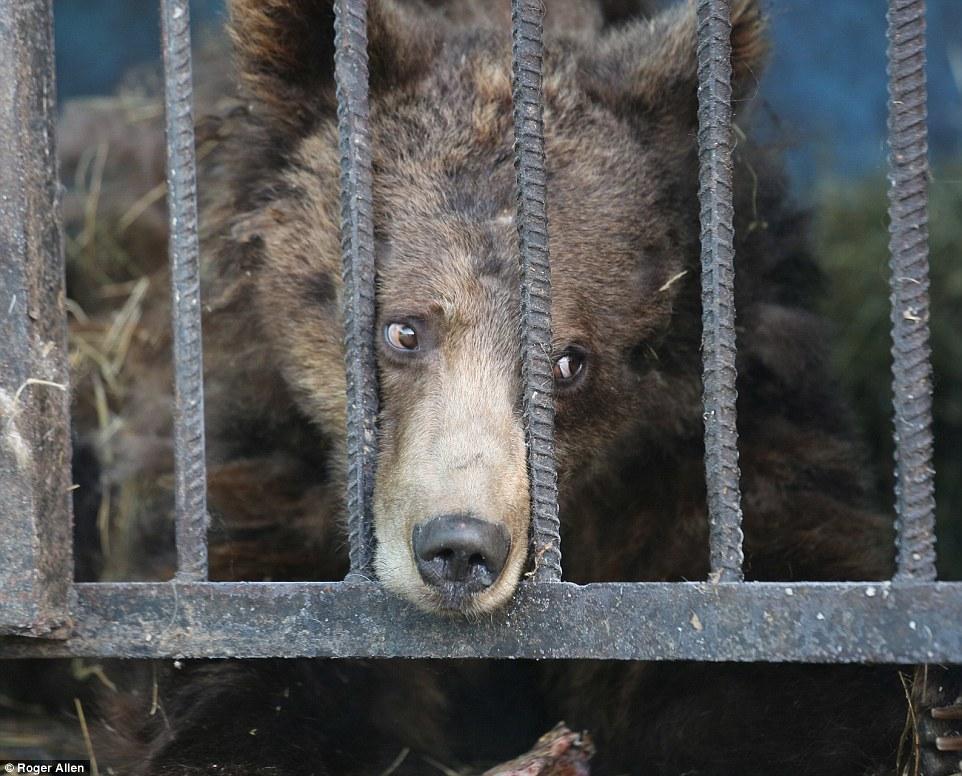 这可能是世界上最小最悲伤的动物园