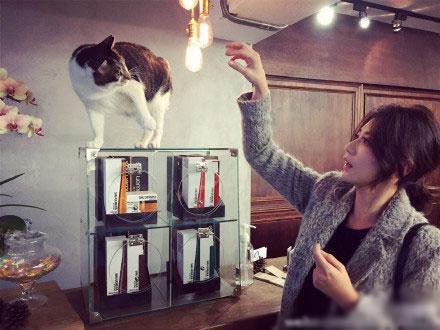 [明星爆料]贾静雯逗猫遭反击 受到惊吓表情可爱(图)