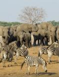 津巴布韦国家公园拟卖大象补贴开支