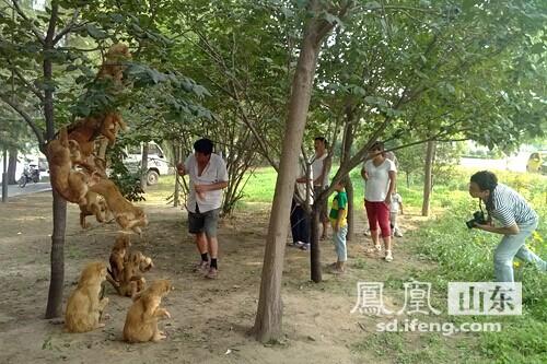 """赵王河畔来了一群""""小猴子"""""""