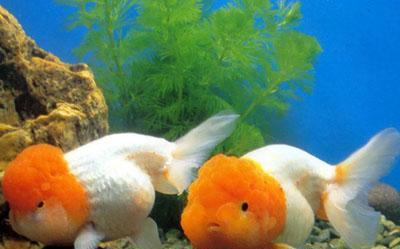 壁纸 动物 海底 海底世界 海洋馆 水族馆 鱼 鱼类 400_249