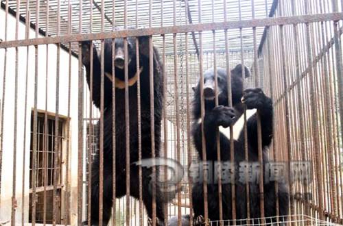 铜陵天井湖公园动物园熊宝宝茁壮成长