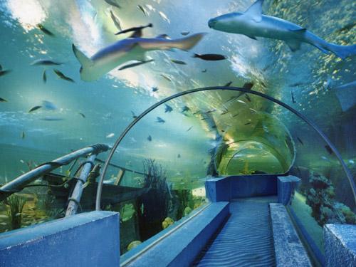 主要经营海洋生物展示,海洋动物表演,海洋科普教育,潜水项目及旅游