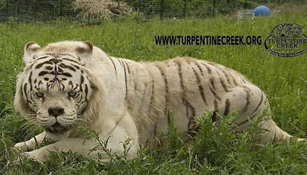 世界最丑老虎雄风不再!盘点全球十大最丑物种