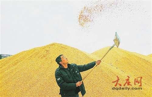 大庆农民喜卖粮图片