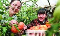 优质农产品产业集群不断壮大