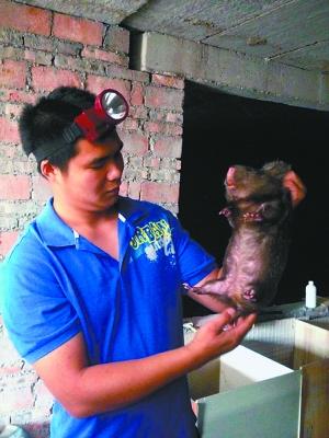 重庆永川吴陶:饲养竹鼠第一人