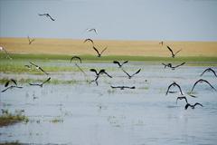 鹤之洲湿地公园