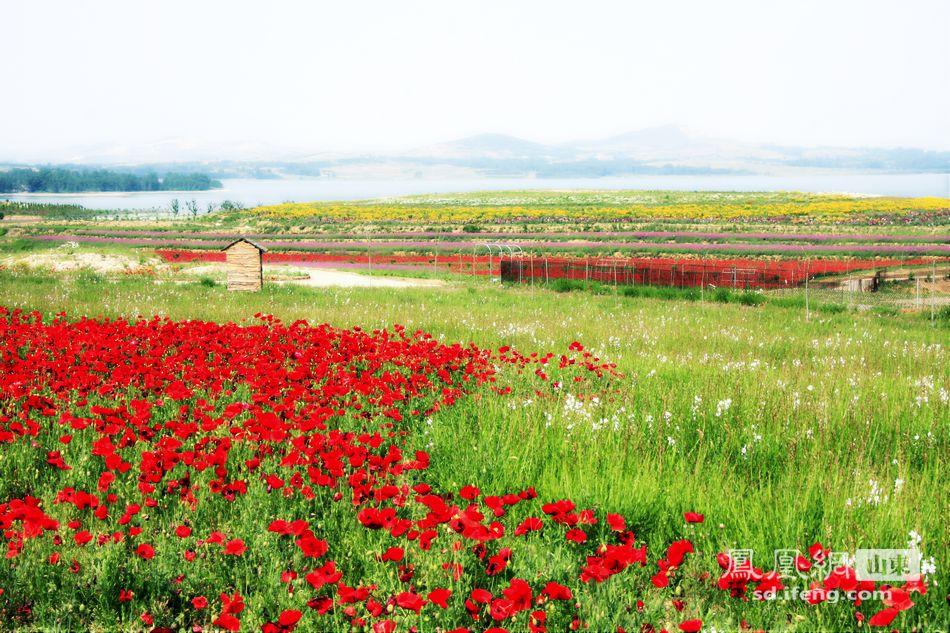 花仙子风景区坐落于日照水源水库边