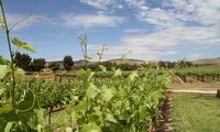 葡萄种植园