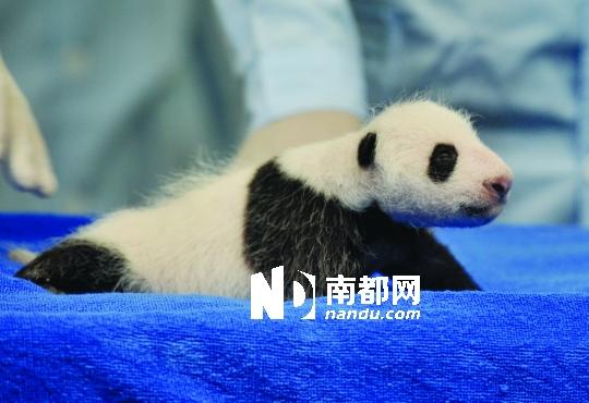 野生动物世界之华南珍稀动物物种保护中心顺利诞生