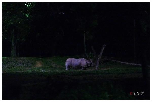 动物 观看 野生动物园/乘车浏览结束以后,游客还可以观看动物表演,叫《夜晚的精灵》...
