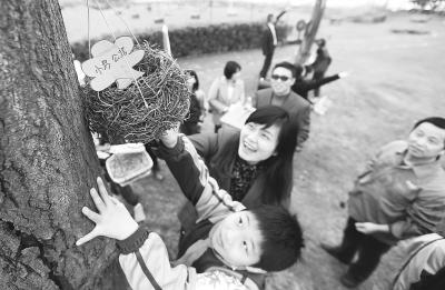 """参加""""爱心护鸟""""行动的同学们在挂鸟巢。                         记者何晓刚 摄"""