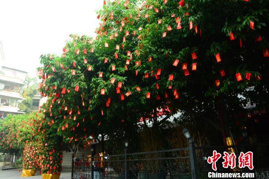 图为桂林一家餐馆门前树上挂满红包 李果 摄