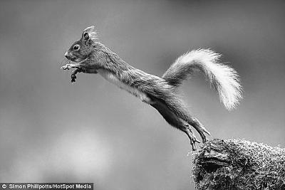 这种小动物就喜欢跳跃,摄影师西蒙捕捉到它的滑稽动作.