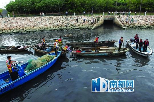 昨日上午,深圳湾大桥以东海域,渔政执法人员将藏在涵洞内的三无船