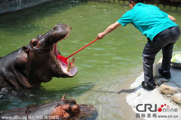 山东青岛森林野生动物世界的工作