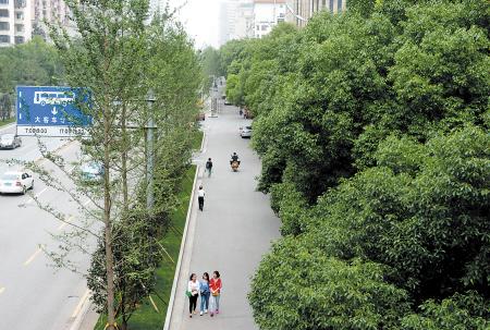 芙蓉路上高大的樟树和银杏等树种错落有致,层次分明.