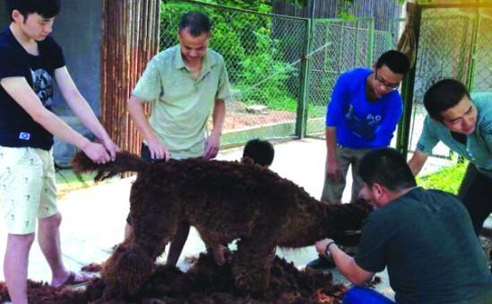 合肥野生动物园启动避暑模式