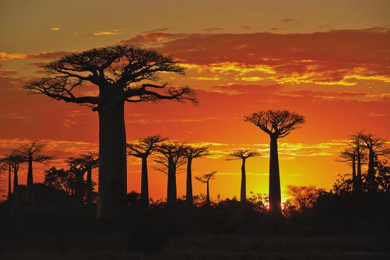 但随着非洲动物大迁徙透过荧幕渠道逐渐为我们所熟知