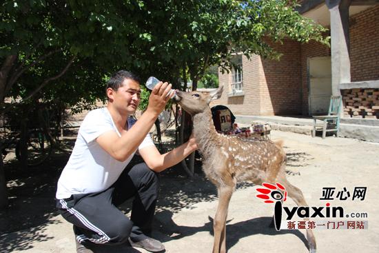 裕民县野生动物救护站工作人员救助国家二级保护动物