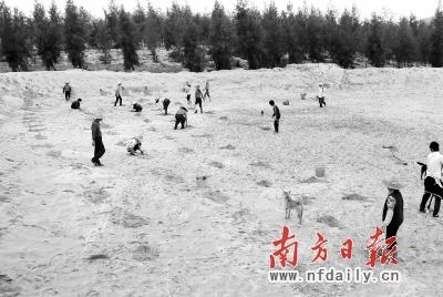 广东治沙 阻止沿海土地 沙漠化