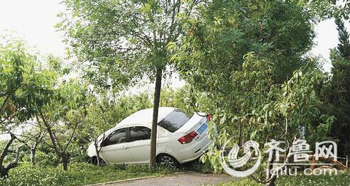 司机让车飞上树