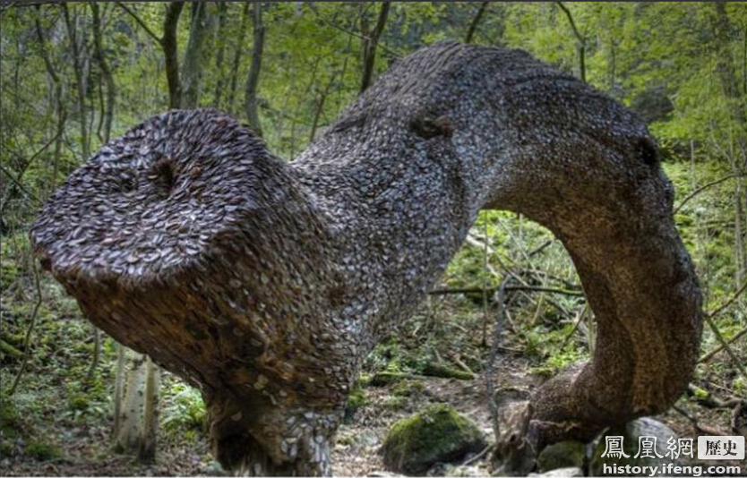 英国发现数百岁诡异巨树:周身长满硬币 真有摇钱树? - 人在上海    - 中国新闻画报