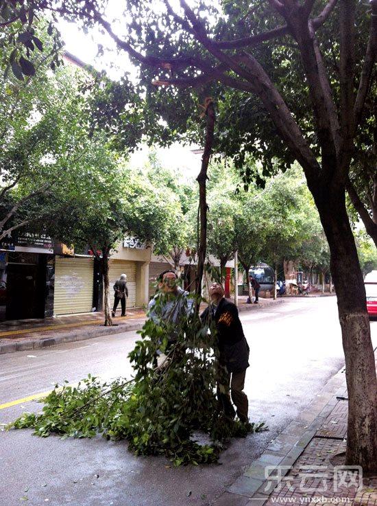 工作人员正在清理折断的树枝.