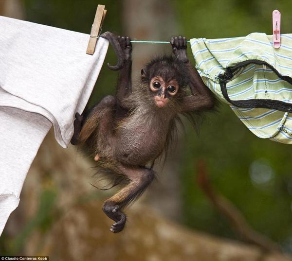 小猴子泡澡玩手机 野生动物摄影展现自然大观