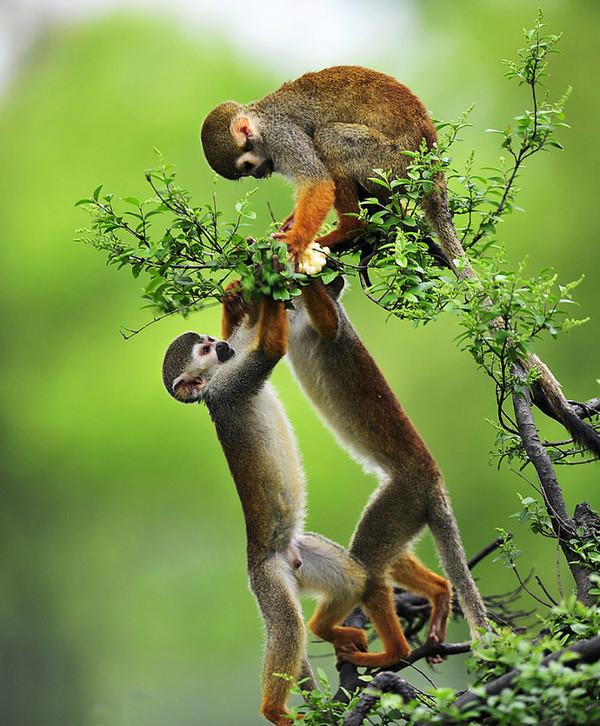 可爱的猴 - 海阔山遥 - .