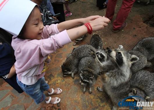 云南野生动物园动物过中秋(图)