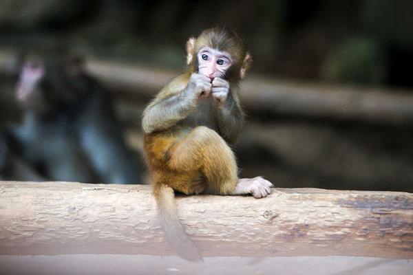 三峡猴溪是国家野生猕猴保护区,由仙女索道(长888米),仙鹤洞