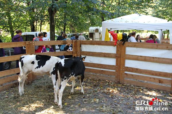 布鲁塞尔公园里的牛圈
