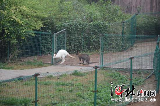 石家庄动物园引进10个新品种