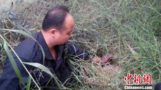 孟军亲手将藏在草丛中的逃犯李孟军抓获监狱部门提供摄