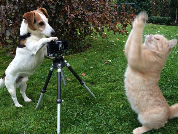拿动物比喻明星的图片