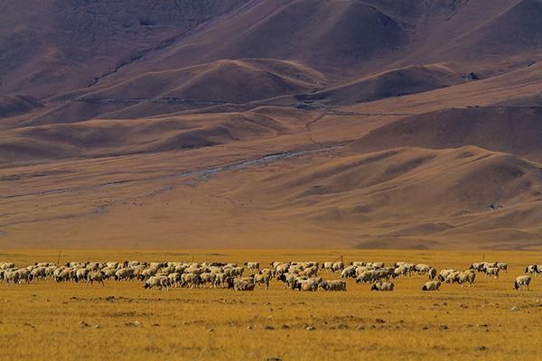 美如画卷的新疆风光 - 闲云野鹤 - 闲云野鹤的博客