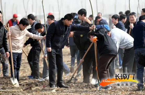 廊坊文安县千余干部职工参与植树造林改善环境