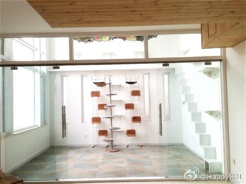 自己设计的猫房!