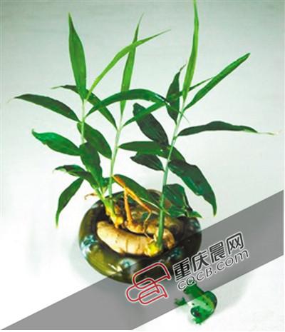 盆栽植物发芽简笔画