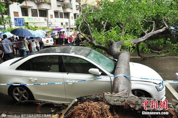广东江门遭遇暴雨袭击 大树连根拔起砸坏汽车
