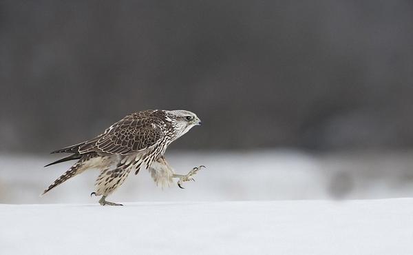 国际野生动物摄影大奖出炉 记录多彩大自然(高清组图)
