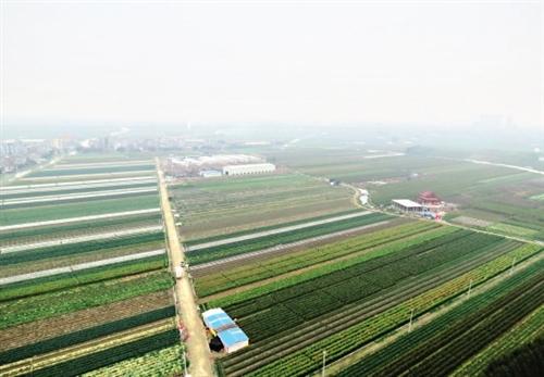 新美农业 地上的蔬菜天上来|太空|飞船_凤凰资讯