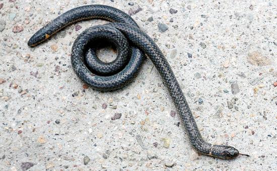 滚动新闻  原标题:双头蛇与两头蛇 2015年8月,南宁动物园蛇馆收到一蛇