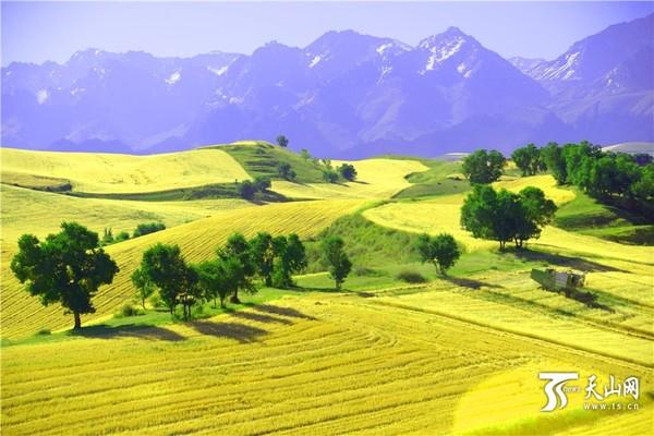 新疆奇台县江布拉克风景区