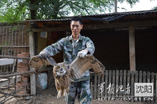 解放军战士救治国家二级重点保护动物雕鸮(图)