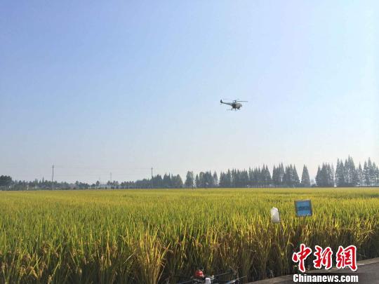 图为无人机在演示喷雾。 谢盼盼 摄