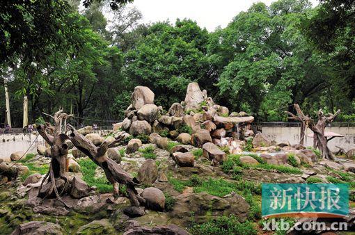 """猴年去哪看猴? 广州动物园打造新""""花果山"""""""